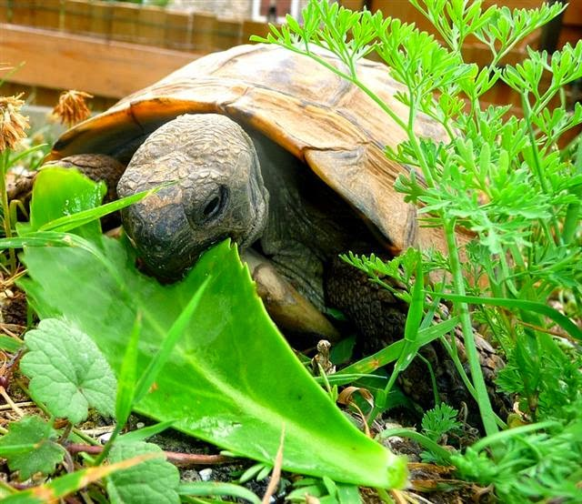 Negozio di animali online cibo per tartarughe for Tartarughiere e accessori
