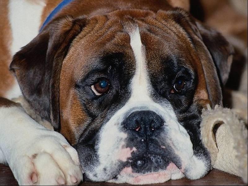Negozio di animali online cibo per cani alimentazione in for Cucce per cani in offerta