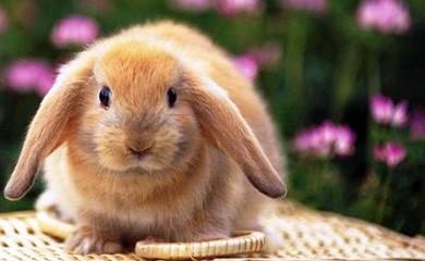 Roditori e conigli
