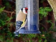 Uccelli del giardino