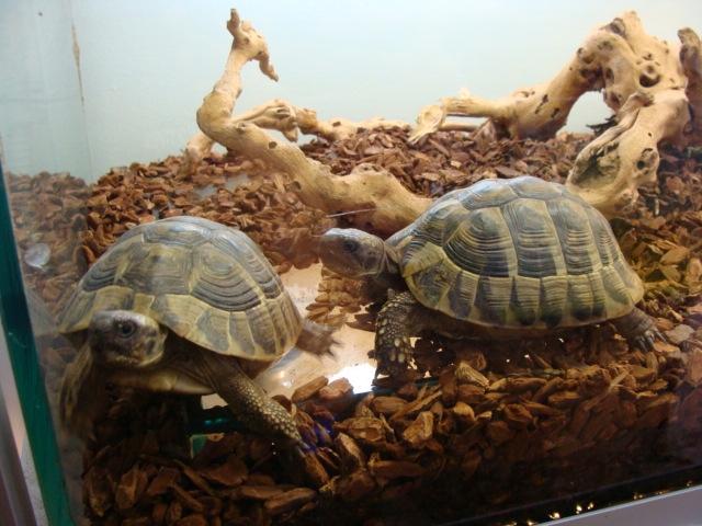 Negozio di animali online hermanni elenco animali vivi for Vendita carassi vivi